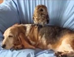 Foto: Câinii din Japonia şi alte prietenii între animale