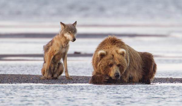 5 poze cu animale care au uimit lumea