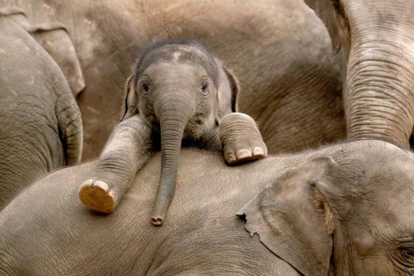 Foto: 5 animale haioase care au uimit lumea