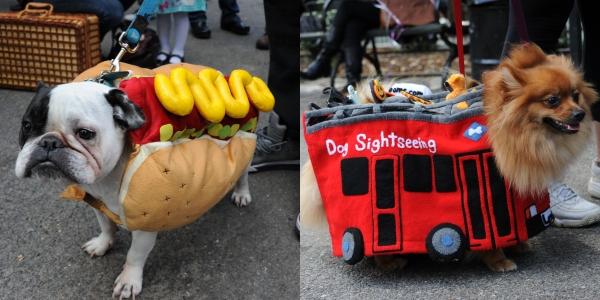 Foto: cele mai haioase costume de Halloween pentru căţei