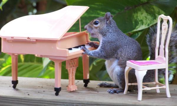 Foto: veveriţe haioase în rol de Barbie şi Ken