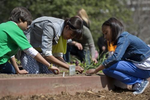 Ghiceşte vedeta: Cine este celebritatea care plantează spanac de primăvară?
