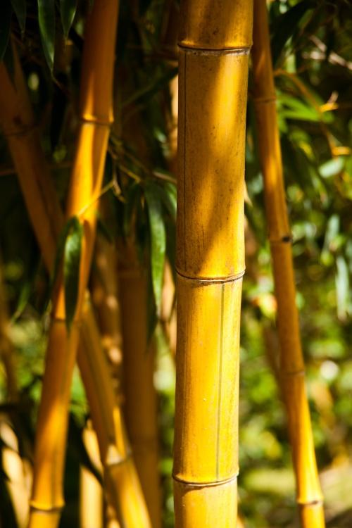 Scapă de CELULITĂ! Masajul cu bambus înlătură aspectul de coajă de portocală