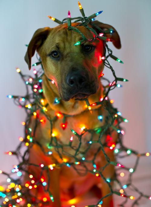 Cum îţi decorezi casa de Crăciun