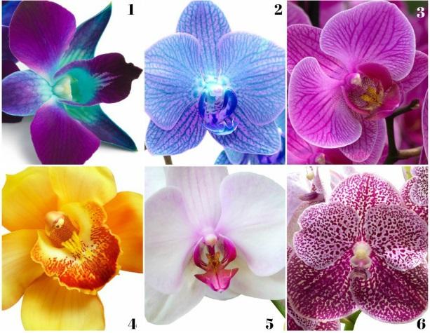 Alege orhideea care te atrage