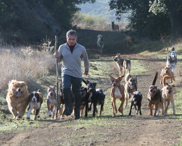 Cesar Milan la plimbare cu cainii