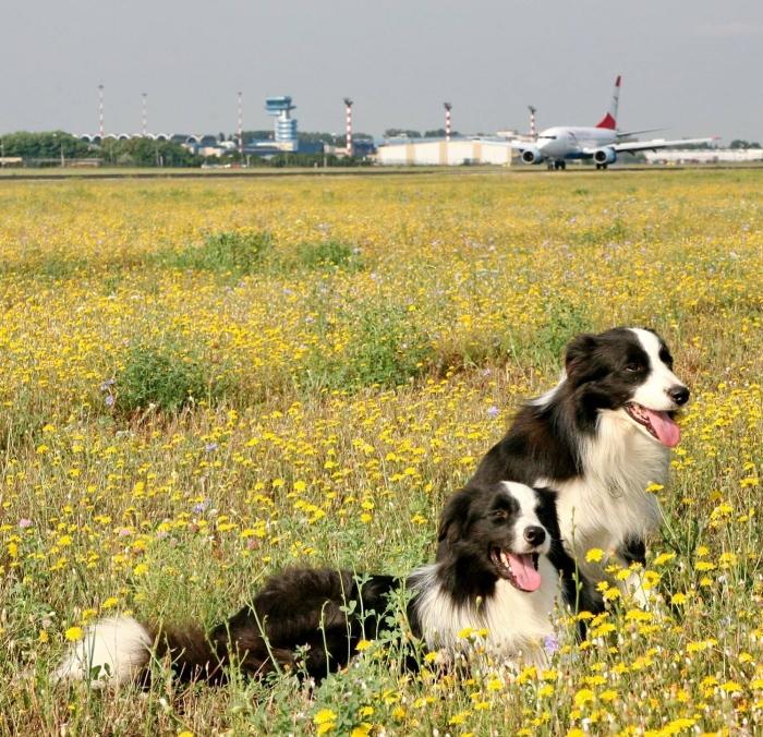 Mai mulți căței, angajați ai aeroportului Henri Coandă. Ce job au