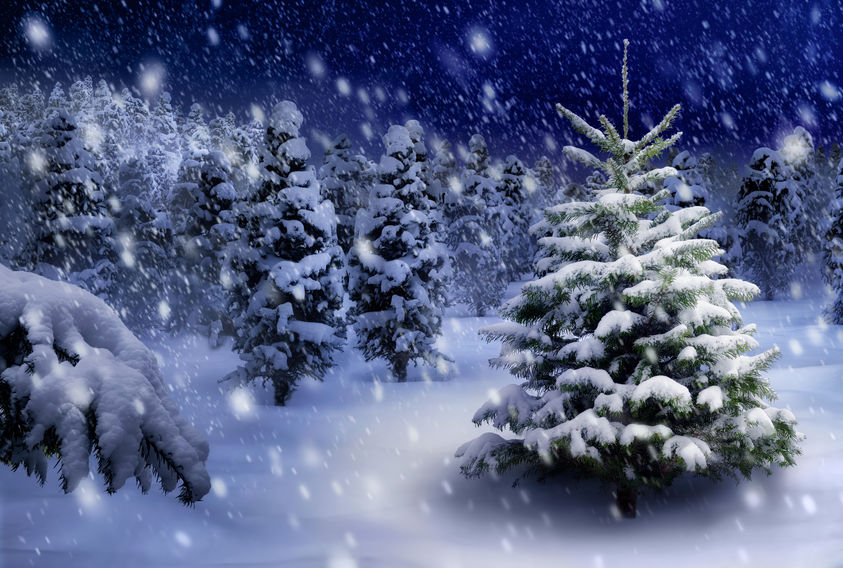 Legende despre bradul de Crăciun