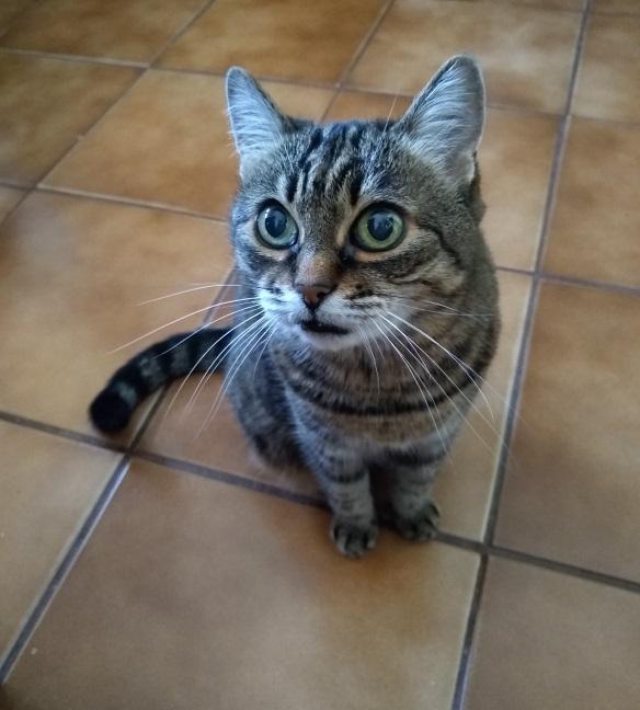 pisica tifon fototgrafiata cu moto g6