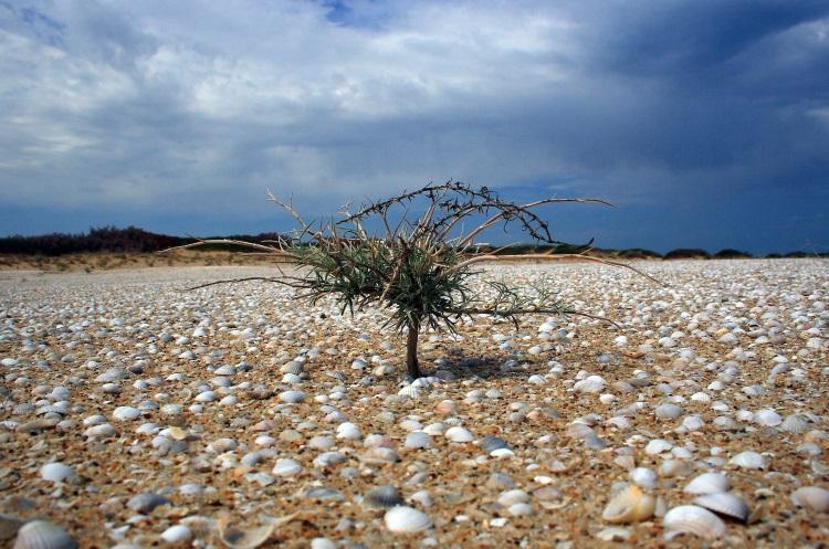 Marea Aral care s-a transformat in desert plin de scoici si un copac in mijloc