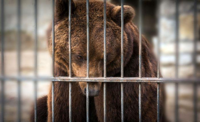 urs la gradina zoologica