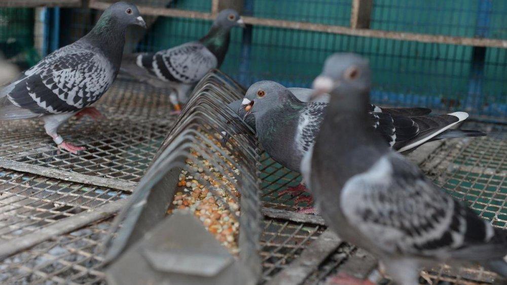 Femeia care cauta porumbel Site- ul de intalnire pentru asisten? a financiara