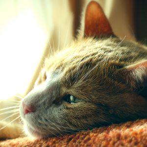 prima-pisica-din-lume-infectata-cu-noul-coronavirus