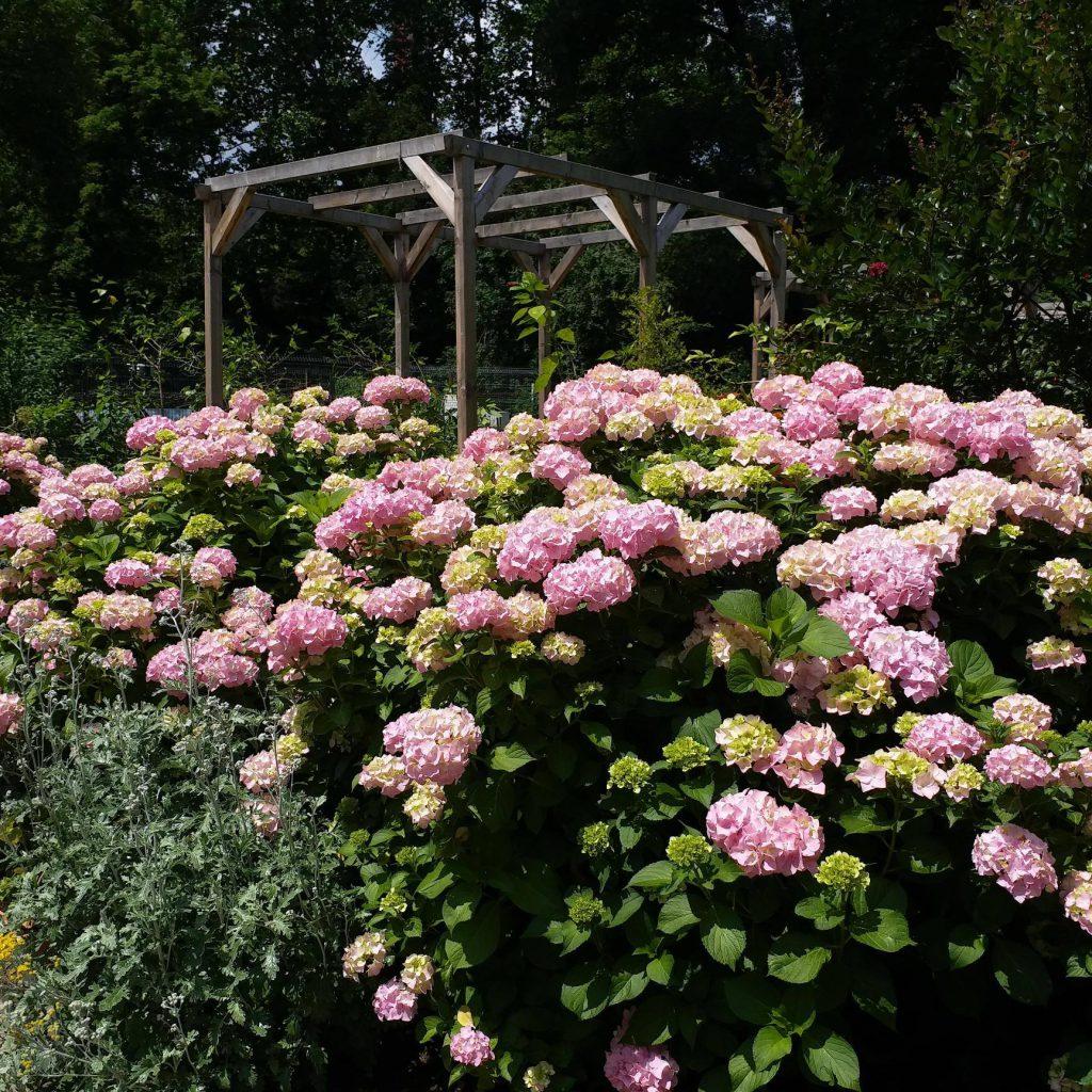 Grădina Botanică din București, cea mai relaxantă zonă din oraș